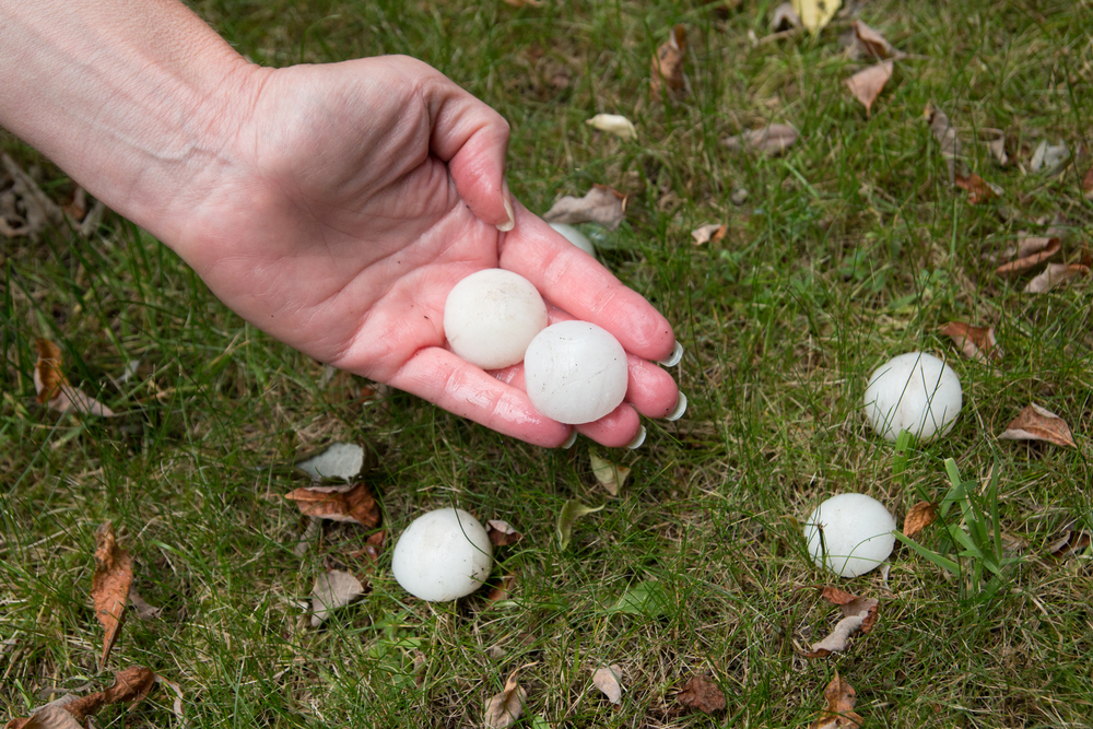 Hail on grass